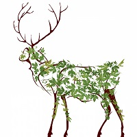 1127733-deer-illustration